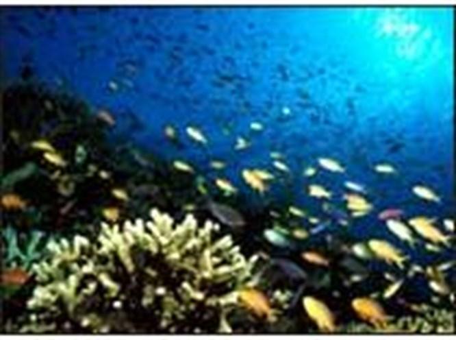 Mercan kayalıkları tehlikede